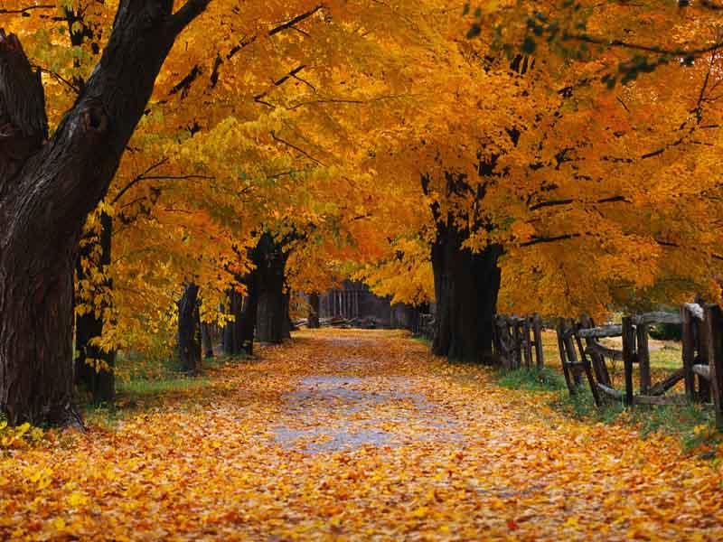 autumn_scene_1