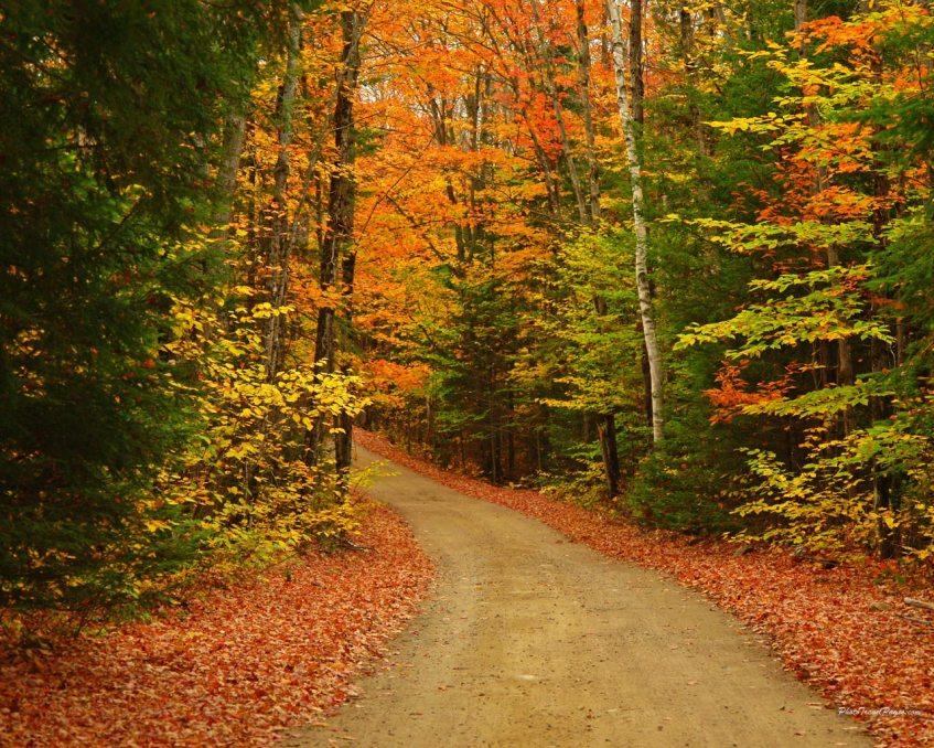 autumn_scene_16