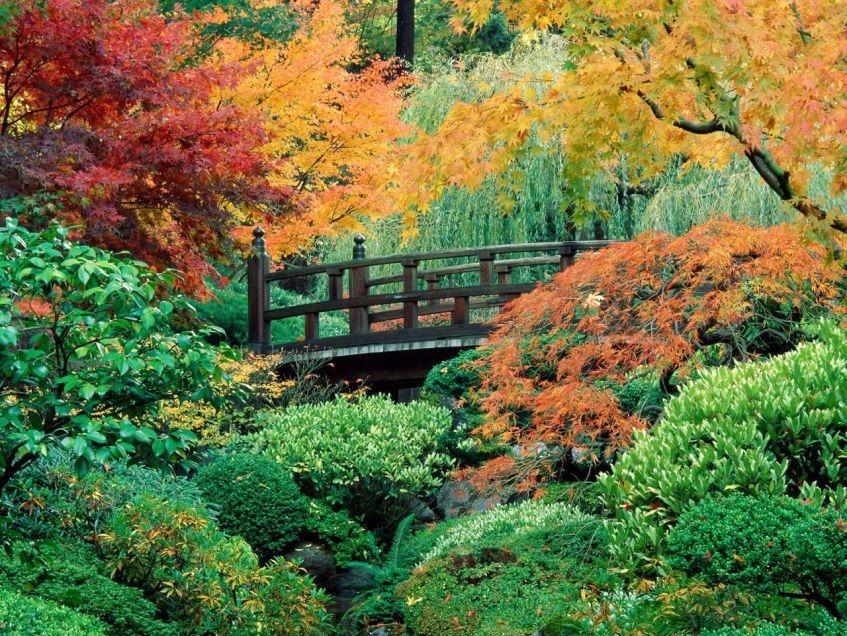 autumn_scene_7