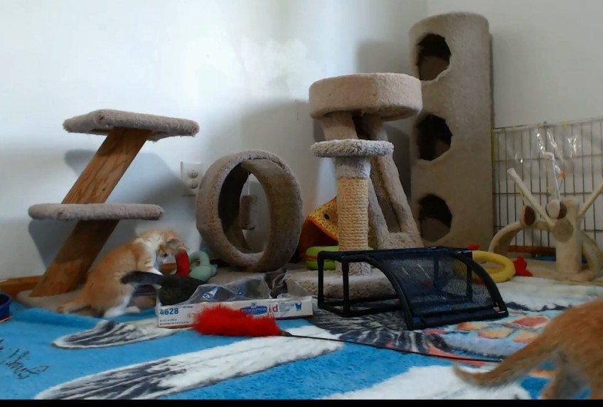 the Scientist Kittens in their playroom