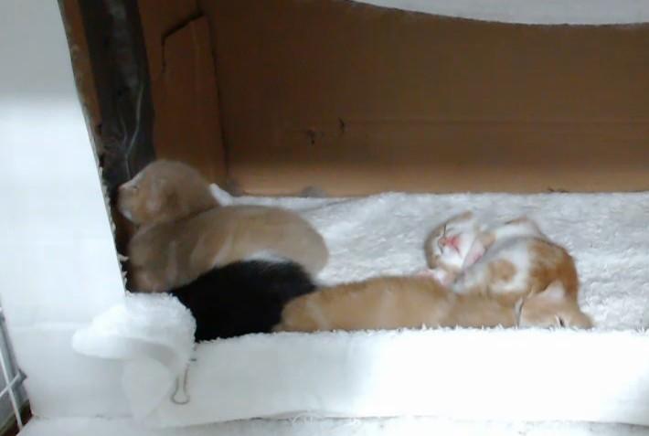 Spice kittens2
