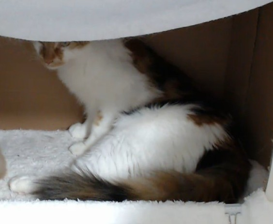 Spice kittens5