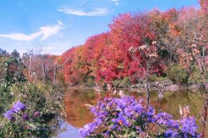 gm_lakelogan_fall_foliage